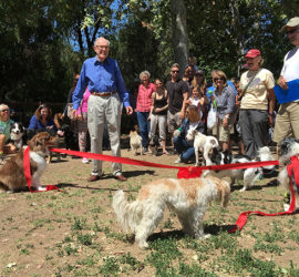 Dogs Holding Ribbon